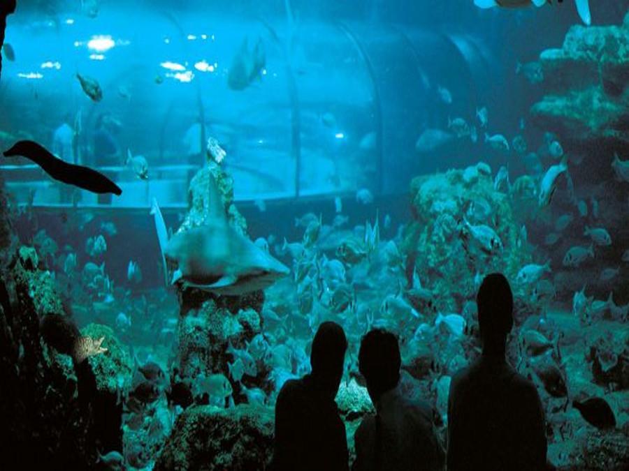 Aquarium, Barcelona (Barcelona)
