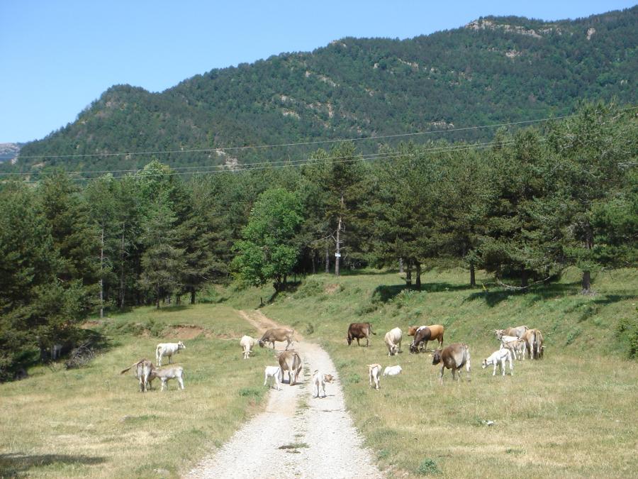 Els Oms, Sant Jaume de Frontanyà (Berguedà)
