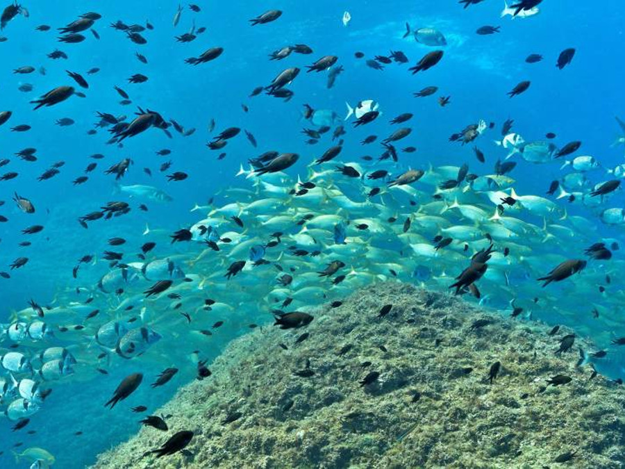 Costa Brava colònies nàutiques per primària i ESO